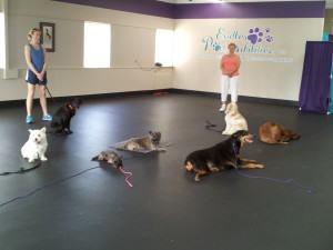 How Do I Choose a Dog Trainer