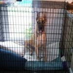 Annie in her kennel