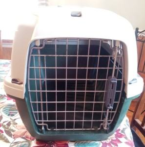How Do I Get My Cat into Their Carrier
