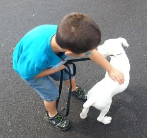 Teach Your Kids Responsible Dog Ownership