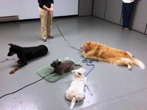Does Dog Training Come with a Guarantee