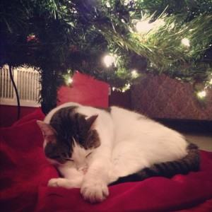 ift Ideas for Your Cat this Christmas