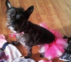 5 Halloween Costume Ideas for Your Dog Ballerina
